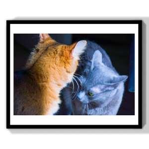 limited art photographe animal
