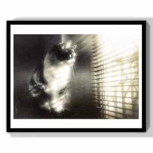 monochrome cat photography print