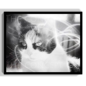 The Concept Cat by Jacques Julien