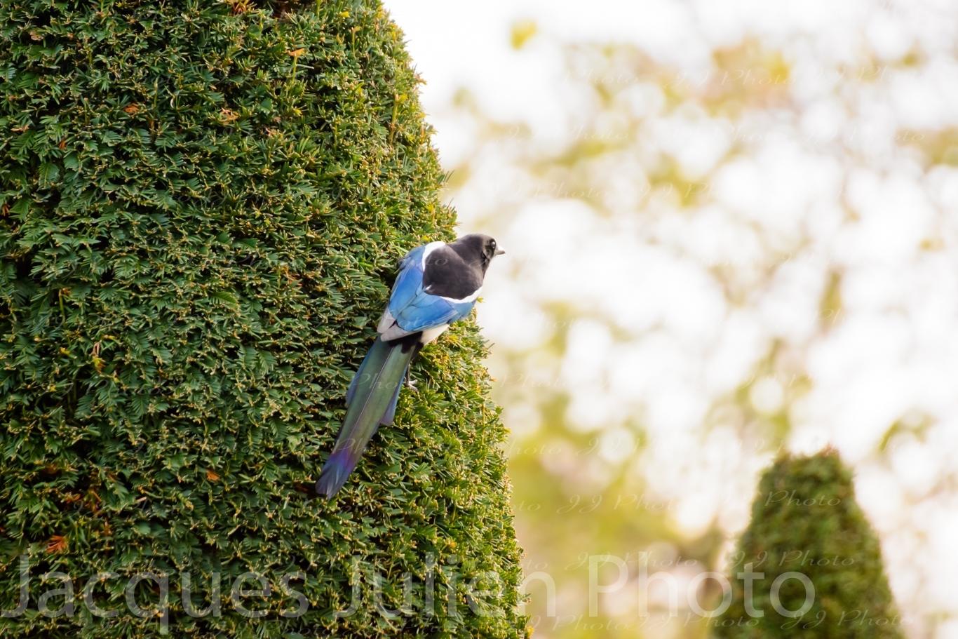 photographie d'oiseau art
