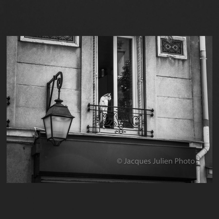 Jacques Julien Pictures gallery