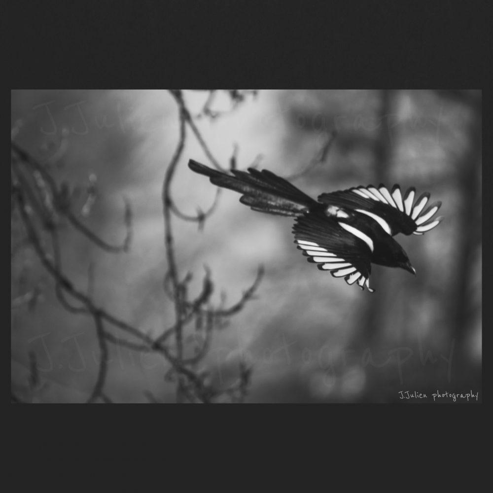 Bird photography black and white art print
