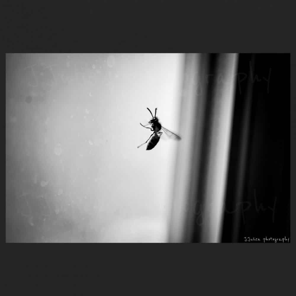 bee insect photography art by Jacques Julien