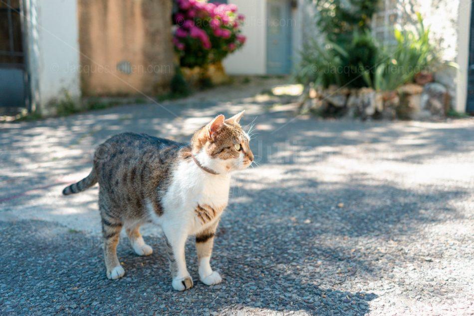 photographie animal domestique