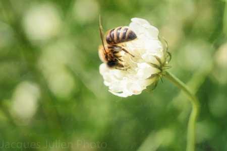 Bee on flower – Art photo