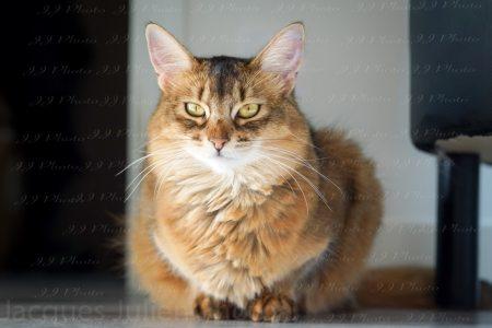 Photographie de chat orange