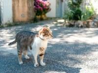street cat stock photo  - Home