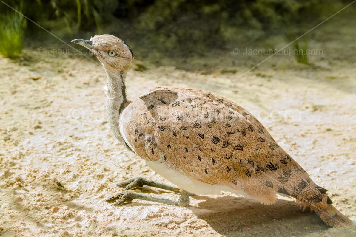 big bird art photography