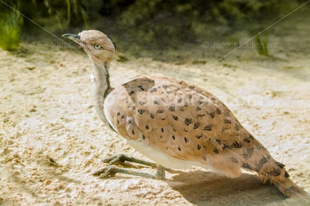 big bird art photography