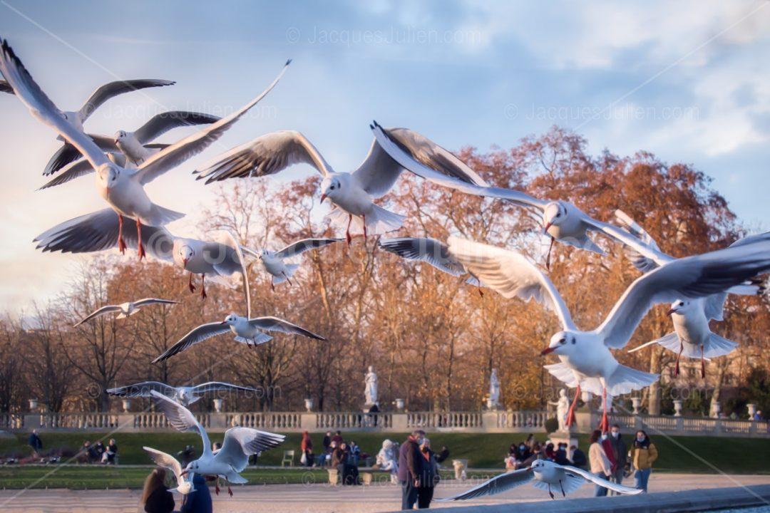 Photo d'oiseaux par Jacques Julien