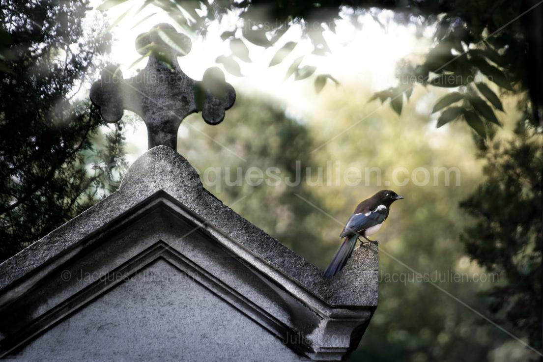 art photography bird in a cemetery