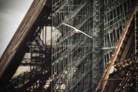 Gull in flight near an industrial structure – art photography