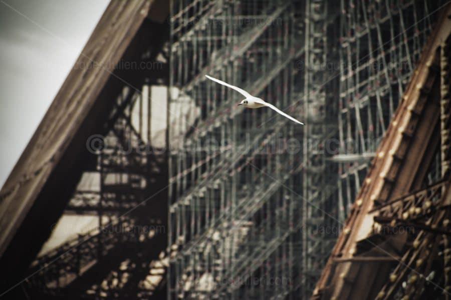 oiseau blanc volant sur la tour Eiffel