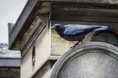 Raven perching on a grave – Stock Photo