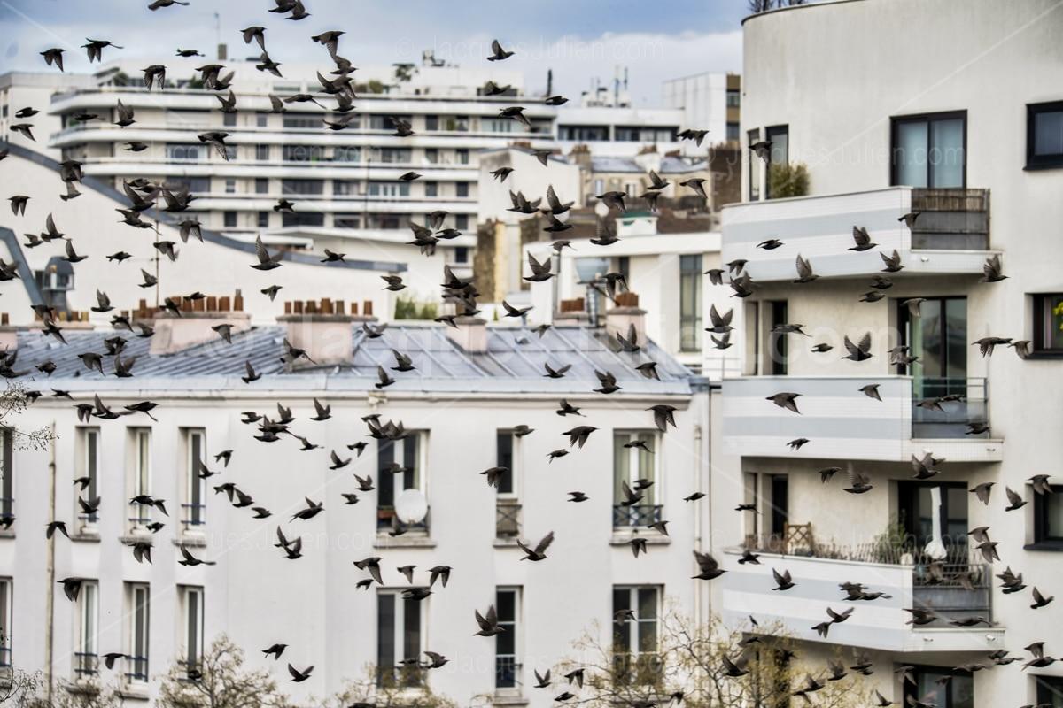 many birds flying in street