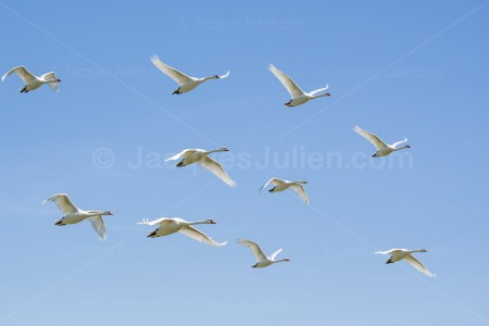 group of birds in the sky