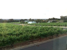 The view - overlooking the vines