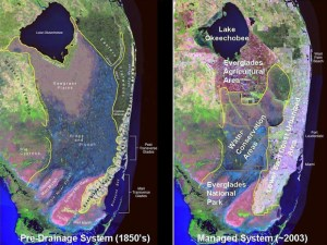 Nothing has affected to flow of water south to the Everglades more than the creation of the EAA south of Lake O. (Map Everglades Foundation.)