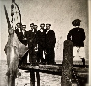 Stuart youths pose with a 14-foot sawfish hoisted on a dock around 1916. (Photo Jack E. McDonald courtesy Sandra Henderson Thurlow's book Stuart on the St Lucie)