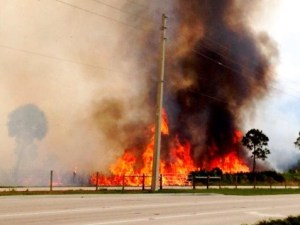Fire June 2014 Savannas State Park, Jensen Beach Boulvard. Martin County Scheriff Twitter shared photos.