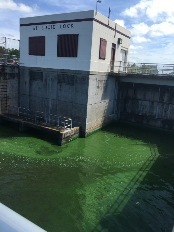 St Lucie Locks and Dam 6-21-16