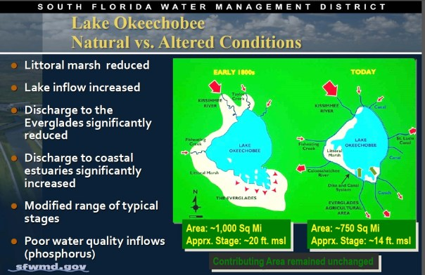 screenshot The False Edge of Lake Okeechobee IFAS NARLI