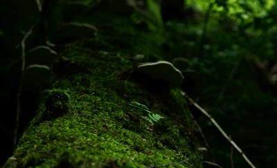 """Spacer przez rezerwat """"Przełomy pod Książem"""" to możliwość podziwiania 73 gatunków mchów, 54 gatunków porostów."""