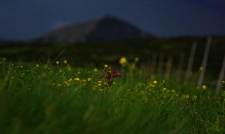 Zbliżająca się burza powoduje swoistą grę światła i cienia. Wtedy łatwiej można dostrzec szczegół, samotny kolorowy kwiat pośród tłumu innych żółtych kolegów.
