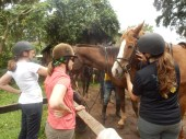 Making friends with our horses in Limuru