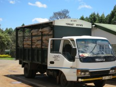 Tea arrives at the factory on trucks like these. Often, the bags are suspended on the trucks so as not to crush the leaves on long journeys.