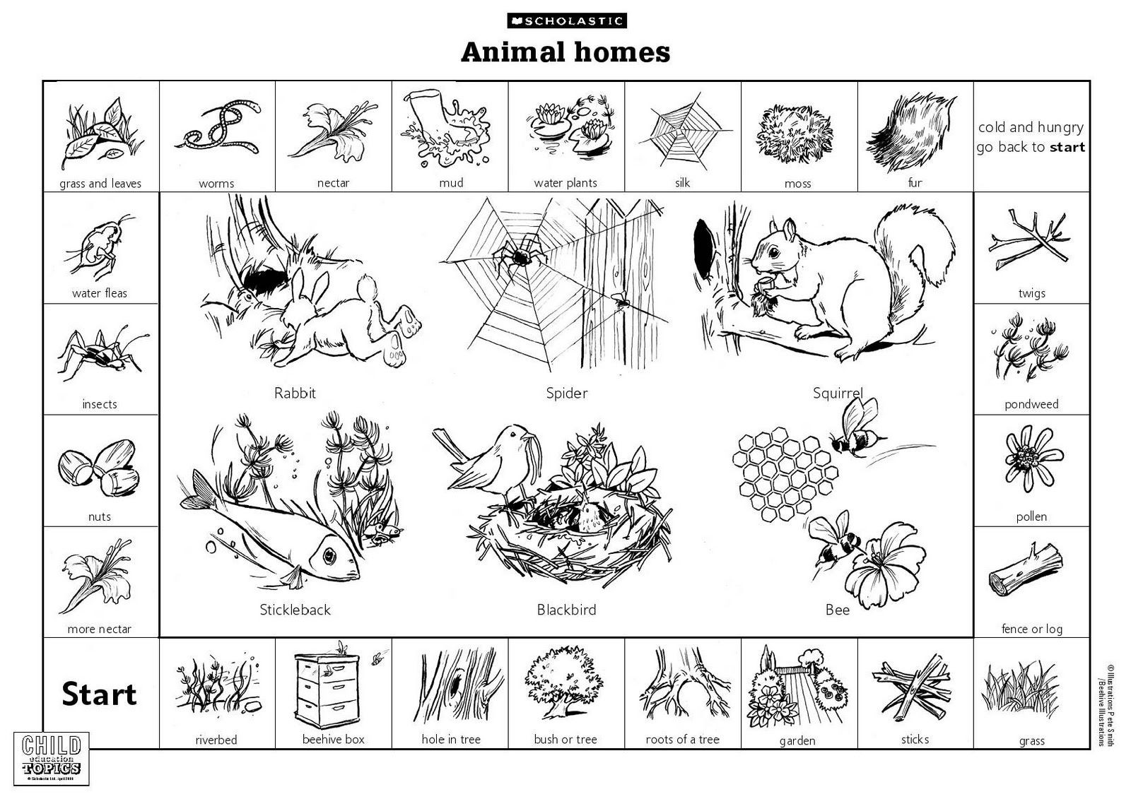 30 Animals That Hibernate Worksheet