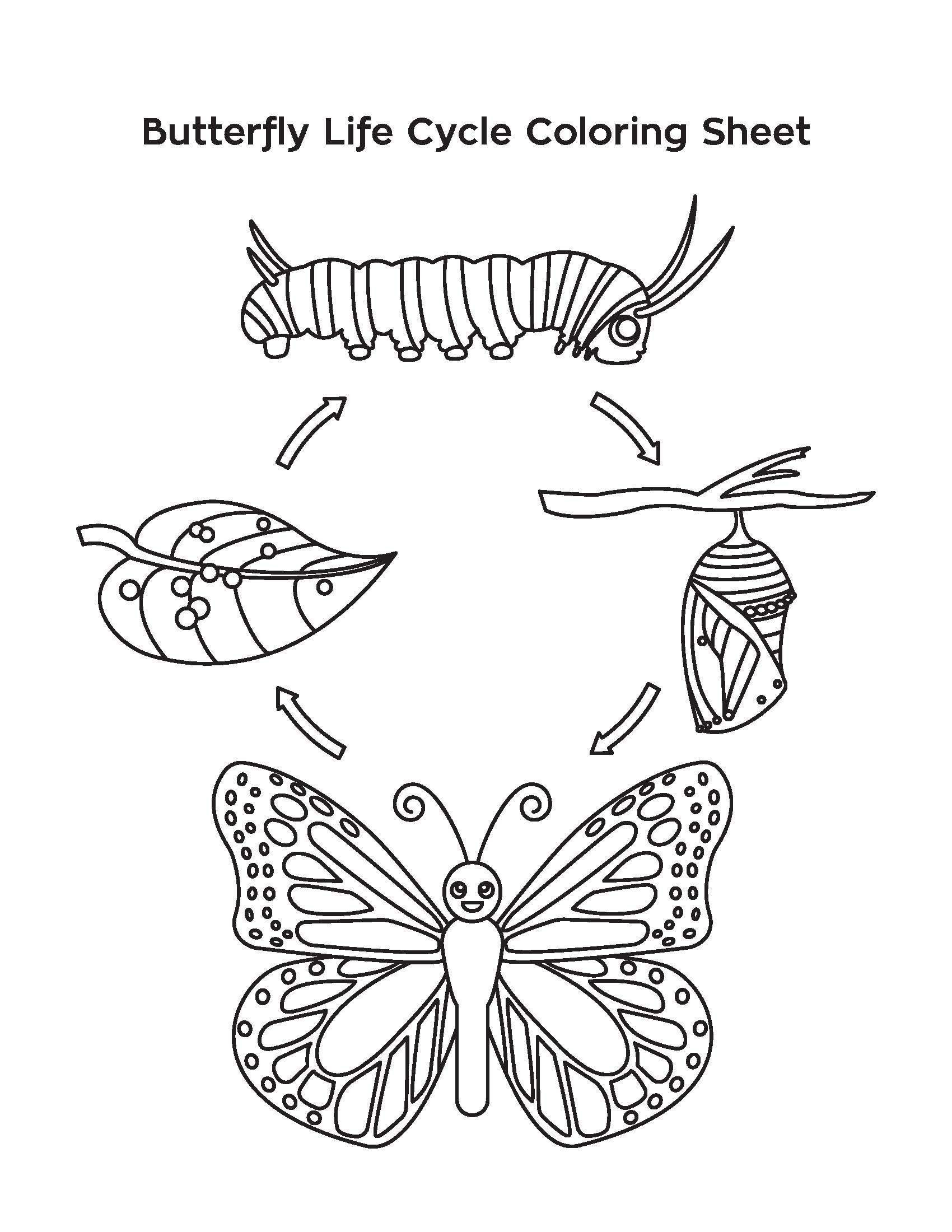 Bee Life Cycle Worksheet Template Library