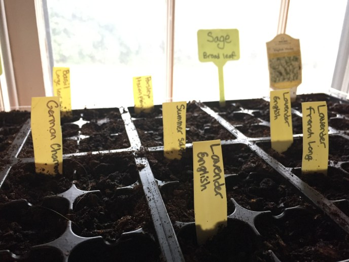I cut a plastic milk jug into plant markers for my seed trays.