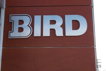 Dimensional - Bird