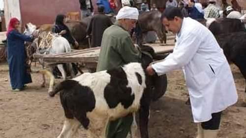 بعد انتشار الحمى القلاعية…السلطات تُغلقُ سوقا للمواشي ضواحي سطات