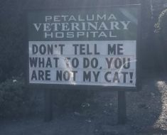 30 Of The Funniest Cat Jokes Vet Clinics Put Up On Their Signs.
