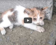 Man found terrified abandoned kitten on the street, when he sees his back legs, his heart broke