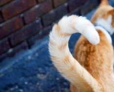 Mouvements de la queue du chat : découvrez leur signification !