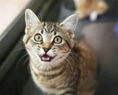 Votre chat miaule tout le temps ? Voici 5 solutions pour y remédier