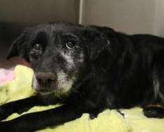 La chienne de 14 ans est abandonnée au refuge pour euthanasie – elle trouve une famille juste avant Noël