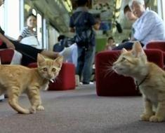 Une entreprise ferroviaire invite à bord 30 chats errants pour les aider à trouver une famille