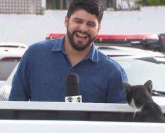 Ce journaliste ne peut s'empêcher de rire lorsque ce chat l'interrompt en plein tournage