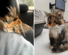 A Stray kitten enters a man's apartment and decides to settle down to live there