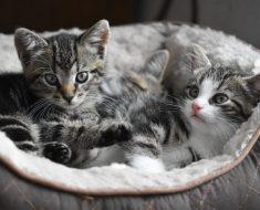 Le chat est un médicament naturel qui apporte ces 7 bienfaits pour la santé