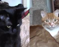 Ces chats n'apprécient pas qu'un robot fasse les bêtises à leur place