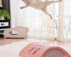 Ce chat réinvente le breakdance en réalisant de superbes figures acrobatiques