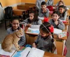 Un chat errant entre dans une classe et transforme la vie de ces élèves en décidant d'y rester