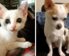 Un chaton errant a été retrouvé seul dans la rue. Elle s'est liée d'amitié avec un chien et a décidé qu'il serait de la famille.