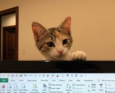 Une entreprise adopte 2 chatons de bureau pour améliorer le moral des employés