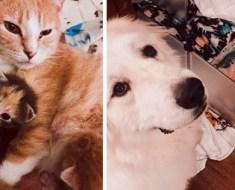 Ce chien accueille les nouveaux chatons au refuge et décide de les aider avec plaisir!